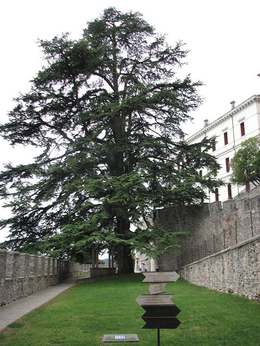 Castelbrando (14)